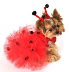 Make one special photo charms for your pets, compatible with your Pandora bracelets. dog custumes halloween, pet costumes, puppy costume ladybug - Tap the pin for the most adorable pawtastic fur baby apparel! You'll love the dog clothes and cat clothes! Puppy Halloween Costumes, Puppy Costume, Cute Dog Halloween Costumes, Happy Halloween, Ladybug Tutu, Ladybug Costume, Animal Costumes, Pet Costumes, Costume Ideas