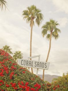 Coral Sands. http://www.gsom.com/places