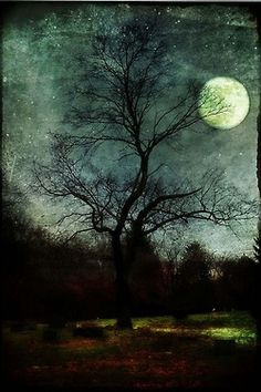 Moonlight can reveal as much as it hides. Watch for the full moon! Moon Pictures, Pretty Pictures, Ciel Nocturne, Moon Shadow, Shoot The Moon, Good Night Moon, Moon Magic, Beautiful Moon, Wow Art