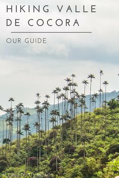 You can't visit Salento and not hike in the spectacular Valle de Cocora. Here's everything you need to know to plan your hike. Trip To Colombia, Colombia Travel, Peru Travel, Travel And Tourism, Backpacking South America, Backpacking Asia, South America Travel, Cali, Colombia South America