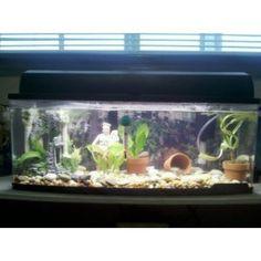 Fluval nano aquariums fluval edge 46l aquariums for Freshwater fish petco