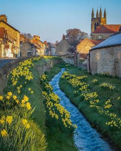 English Countryside, Cumbria, Daffodils, Yorkshire, Pond, Britain, Waiting, Places To Visit, England