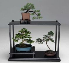 A a grouping of bonsai plants  ( James Nielsen / Houston Chronicle ) Photo: James Nielsen, Staff / © 2014  Houston Chronicle