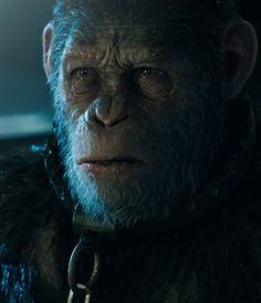 War for the Planet of the Apes (2017) [[watch ]] online. full .HD@1080p*