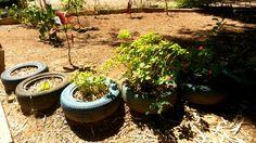 Plantinhas e pneus. #aspectoambiental