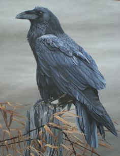 The raven is a big black bird, a member of the crow family. It is all black with a large bill, and long wings. Crow Art, Raven Art, Bird Art, Raven Totem, Beautiful Creatures, Corvo Tattoo, Power Animal, Jackdaw, Crows Ravens