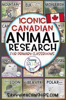 like to try to combine Language Arts with Science whenever I can. That's why I came up with my Non-Fiction Animal research units for Primary classrooms. First Year Teachers, New Teachers, Elementary Teacher, Upper Elementary, Classroom Organization, Classroom Management, Primary Classroom, Future Classroom, Teaching Resources