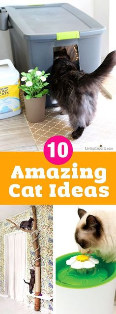 10 Amazing Ways to Spoil Your Cat! Fun DIY cat toys, kitty litter ideas and othe 10 Amazing Ways to Spoil Your Cat! Fun DIY cat toys kitty litter ideas and othe Cool Cats, Cool Cat Toys, Diy Cat Toys, Cats Diy, Diy Toys For Your Cat, Diys For Cats, Homemade Cat Toys, Diy Jouet Pour Chat, Cat Anime