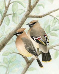 Bird Tree with Waxwings  11x14 archival by TracyLizotteStudios, $38.00