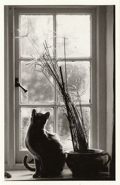 cat in window postcard by the ghost of me, via Flickr
