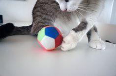 Cotier beim Katzenspielzeugtest