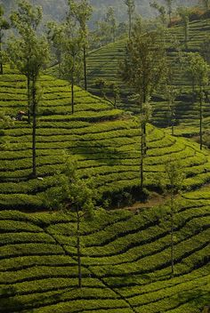 attraction Kalpetta in kerla india | Best kerala tour India | Key word : Hot Tour india, Trip india, holiday package india, tourism india, tourist place india, know about indian culture