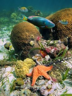 Hard coral with colorful tropical fish and a starfish , Underwater Animals, Underwater Life, Flora Marina, Beautiful Sea Creatures, Sea Plants, Sea Fish, Fish Ocean, Fish Fish, Fish Tacos