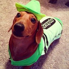 My dog shade of green is perfect for this cutie http://ift.tt/2rLgDpK