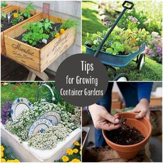 7 Tips for Container Gardening