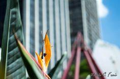 urbanidades e natureza