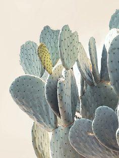 Die Vielfalt der Kakteen überzeugt immer wieder – #pflanzenfreude #kaktus #potm