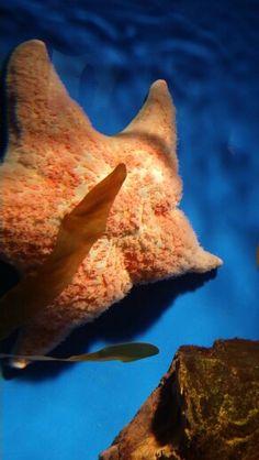 oklahoma aquarium more oklahoma aquariums oklahoma ocean