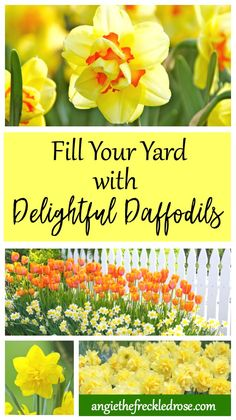 Daffodils are one of my favorite spring blooming flowers. They fill your garden with a golden glow, and are very easy to grow. Also known as narcissus, daffodils have a bevy of landscaping benefits. There are many different varieties to choose from. They