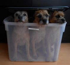 "Levi,Mylo & Ollie *C on Twitter: ""Oh no.. Mum puts us in storage too.."""