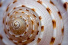 spirals in nature | Spirals in Nature | Swirls and twirls