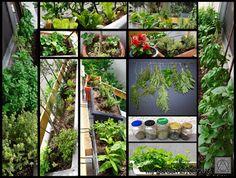 my garden 29/5/2016