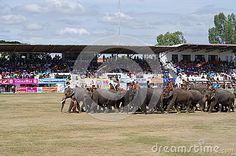 Photo about The Surin Elephant Round-up held annually in November in Surin province, Isan, Thailand. Image of animal, ball, asia - 39873697 Image Photography, Editorial Photography, Thailand Adventure, Festivals Around The World, Animals Images, Dolores Park, November, Asia, Elephant