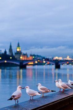 Seagulls In London iPhone 6 Plus HD Wallpaper