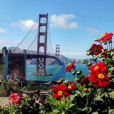 Golden Gate Bridge by Steven Roque #sanfrancisco #sf #bayarea #alwayssf #goldengatebridge #goldengate #alcatraz #california