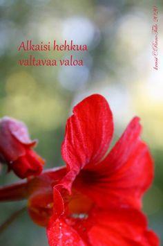 voimakortti Alkaisi hehkua valtavaa valoa Affirmation Cards, Affirmations, Plants, Tie, Cravat Tie, Ties, Plant, Positive Affirmations, Confirmation