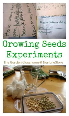 Add some maths and science to your garden with this growing seeds experiment.