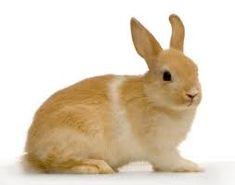 Znalezione obrazy dla zapytania królik