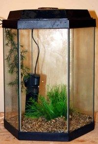 Hexagon fish tank for sale woodworking projects plans for Hexagon fish tank lid