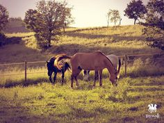 Country Horse
