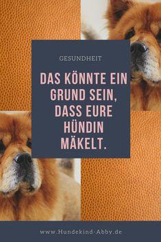 #Hund #Hunde #Hundefutter#Hundepfote #Pfote #Wissenswert #Hundgesund #Hundeliebe #Hundeblog #Hundeblogger