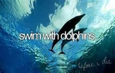 swim with dolphins...26 nov 14