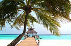 MALEDIVY jsou tím pravým místem pro všechny, kteří milují bílé pláže, jemný písek, teplé moře a podmořský život! :-) - Počasí je tu stabilní po celý rok a navíc si na Maledivách můžete nechat zorganizovat třeba i svatební obřad <3 :-D - Maledivy jsou vysněným místem spousty cestovatelů. Jaká je Vaše vysněná dovolenená? :-) http://www.1-cestovni.cz/last-minute-maledivy #maledivy #exotika #dovolena #lastminute
