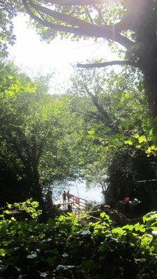 secret lake hidden in the woodland...