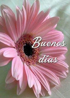 Good Morning Prayer, Morning Love Quotes, Good Day Quotes, Good Morning Funny, Morning Blessings, Good Morning Friends, Good Morning Greetings, Morning Prayers, Morning Messages
