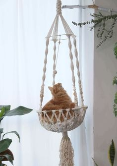 #macramebasket #hangingdogbed #catplanter #wallcatbed #catfurniture #petfurniture #macrameswing #doglovergifts #birthdaygiftsforcat #birthdaygiftfordog #cattoy #dogtoy #wallswing #hanginghammock #petsupplies #macramehanger #macramehammock #catbed #macramelove #macramemaker #macramesupply #catswing #handmade #modernmacrame #etsyfinds #etsy #macramewallhanging #bohodecor #ropeplanthanger #crochethanger #catlovergifts #giftsforher #macrameideas #macrameprojects #wallplanter #largecatbed Diy Cat Hammock, Diy Cat Bed, Rope Plant Hanger, Macrame Plant Hangers, Homemade Cat Beds, Diy Cat Shelves, Cat Wall Furniture, Cat Bedroom, Macrame Projects