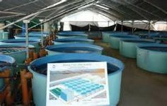 Healthy Fish Grown on Fish Farms