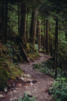 Lens Perspectives — jasonhavenphoto: Jason Haven - Lake Twenty Two,. Forest Path, Dark Forest, Forest Trail, Beautiful World, Beautiful Places, Granite Falls, Nature Landscape, Nature Aesthetic, All Nature