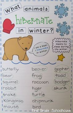 First Grade Schoolhouse: Learning About Animals That Hibernate Kindergarten winter January 1st Grade Science, Kindergarten Science, Kindergarten Classroom, Classroom Activities, English Kindergarten, Montessori Activities, Classroom Decor, Winter Activities, Science Activities