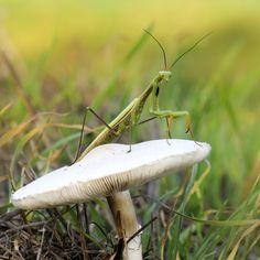 Season mushrooms 2 by mauro maione, via 500px