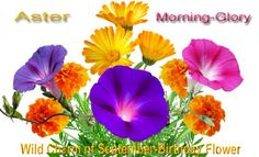 september birth flower - Google Search