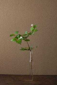 一日一花 川瀬敏郎 2012年6月14日(木) 薄暗い山中で見かけると、花の純白が眼にしみます。 花=衝羽根空木(ツクバネウツギ) 器=古ガラス細瓶(20世紀)