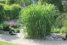Godastunder & Tokiga Ideèr: Min trädgård Garden Maintenance, Contemporary Interior Design, Love Design, Interior Styling, Outdoor Living, Exterior, Landscape, Flowers, Plants