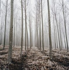 betomad: the ghostly quiet of winter. photo by Danielle Nelson (via Bloglovin.com )