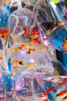Dozens of varieties of fish for sale in the Goldfish Market, also known as the Tropical Fish Market, located on Tung Choi Street in Mongkok. Aesthetic Photo, Aesthetic Pictures, Tropical Fish, Colorful Fish, Fish For Sale, Exotic Fish, Exotic Pets, Wall Collage, Hong Kong