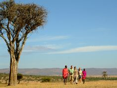 Africa tour and safari packages for luxury, Big family and honeymoon vacations. Everything you need to know about African safaris, from the experts. Honeymoon Vacations, Wildlife Conservation, Kenya, Tanzania, African Safari, Africa Travel, Oh The Places You'll Go, Camping, Tours